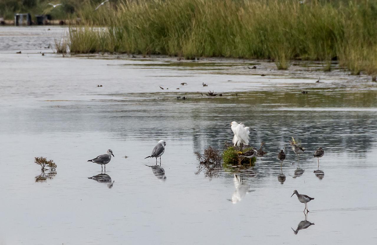Birding at Gordon's Pond
