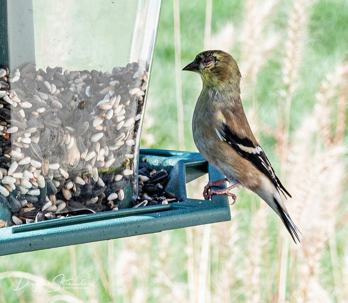 1109-bird on feeder.jpg
