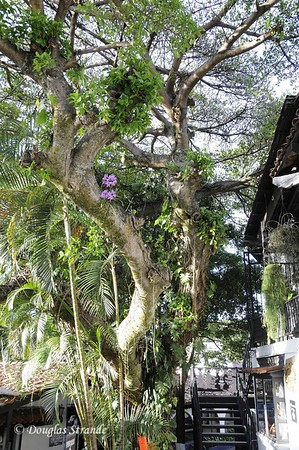 SanJose:  El Pueblo Courtyard
