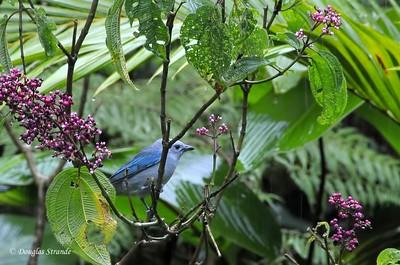 Sarapiqui: bird