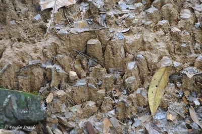 Sarapiqui: giant ant farm