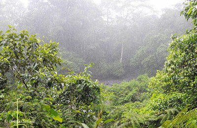 Sarapiqui: Rain forest