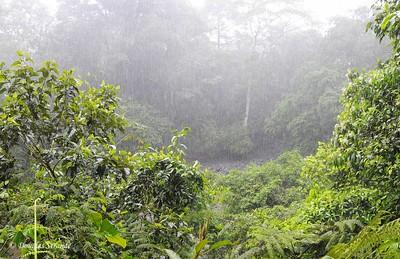 Sarapiqui: Rain forest