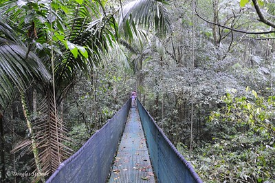 Sarapiqui: 260 meter suspension bridge