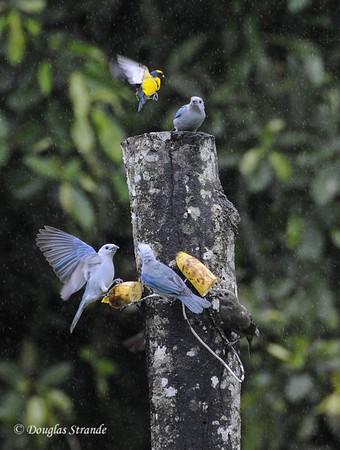 Arenal: birds