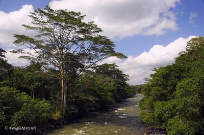 Sarapiqui: river view from bridge
