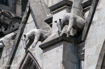 Quito, Ecuador Gargoyles on the Basilica del Voto Nacional