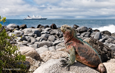 Welcome to My World!   A marine iguana greets the Celebrity Xpedition Punta Suarez, Espanola Island