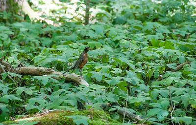 Squawking bird
