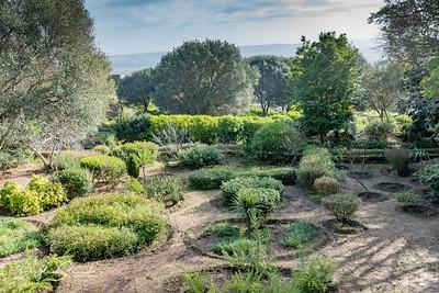 Gardens at Chellah