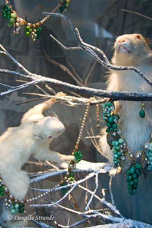 Rodents with Jewelry