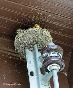 2012  Mystery nestlings