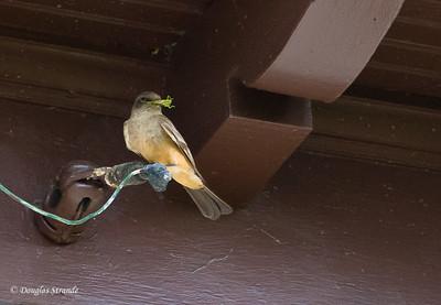 2012  Mystery bird with a grasshoper