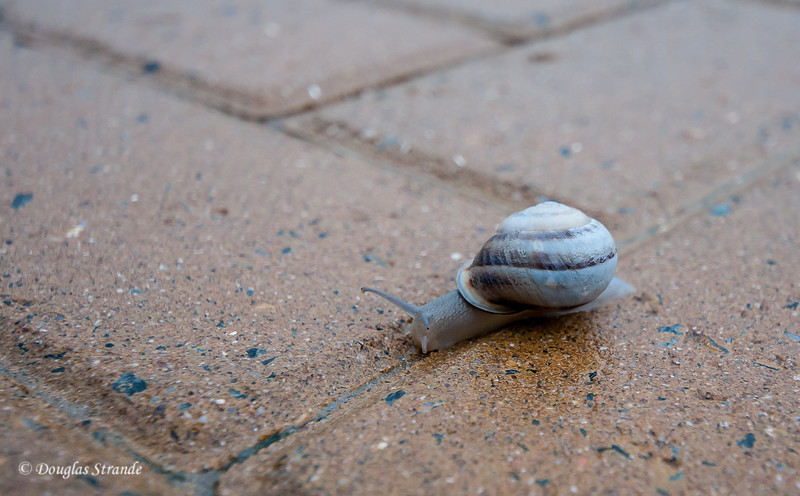 Gibraltar - snail afoot