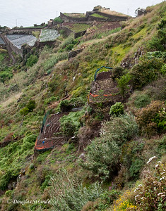 Island of Madeira - terraces