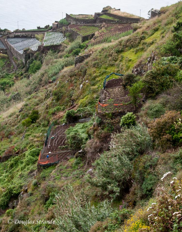 Island of Madeira - terraces