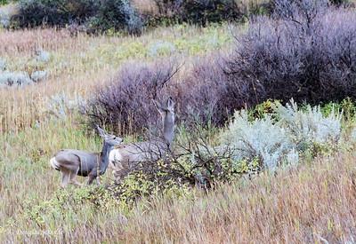 Run, Deer, Run