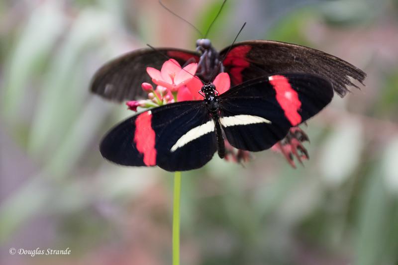 Butterfly Habitat