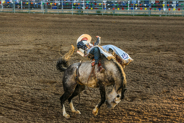 2014 Douglas County Fair Mutton Bustin'