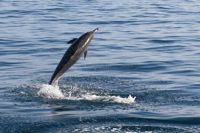 frisky little dolphin