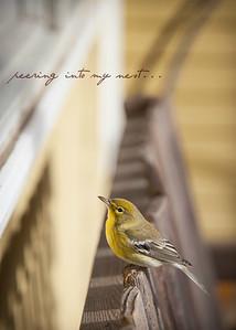 peering into the nest