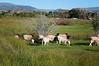 Farm_0628