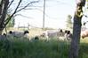 Farm_0610