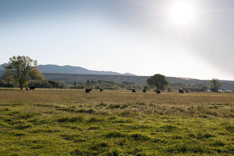 Farm_0559