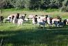 Farm_0595
