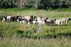 Farm_0594