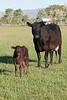 Farm_0566
