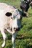 Farm_0591