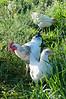 Farm_0532