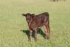 Farm_0568