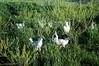 Farm_0520
