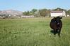 Farm_0575