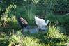 Farm_0511