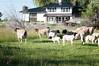 Farm_0618