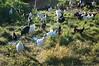 Farm_0538