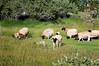 Farm_0620