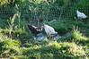 Farm_0510