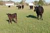 Farm_0569