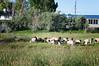 Farm_0592