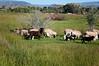 Farm_0631