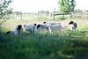Farm_0608