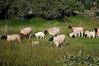 Farm_0621