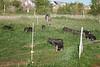 Farm_0541