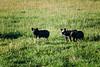 Farm_0547