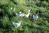 Farm_0522