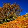 Autumn color 2